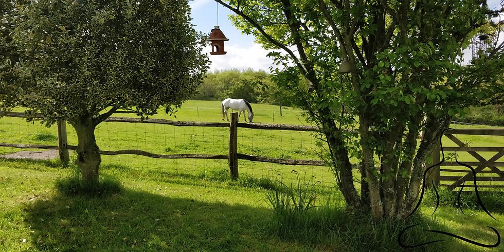 2 Day Meditation Retreat With Horses