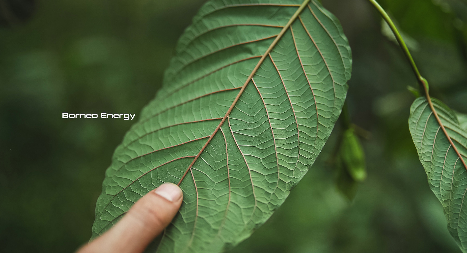 borneo_energy_kratom.jpg