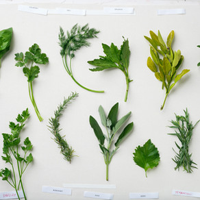 6 Herbs to Boost Your Immune System