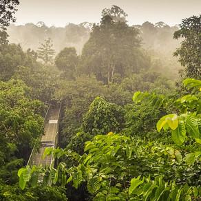 Why Borneo Kratom?