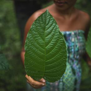 Kratom: Miracle Plant or Dangerous Opioid?