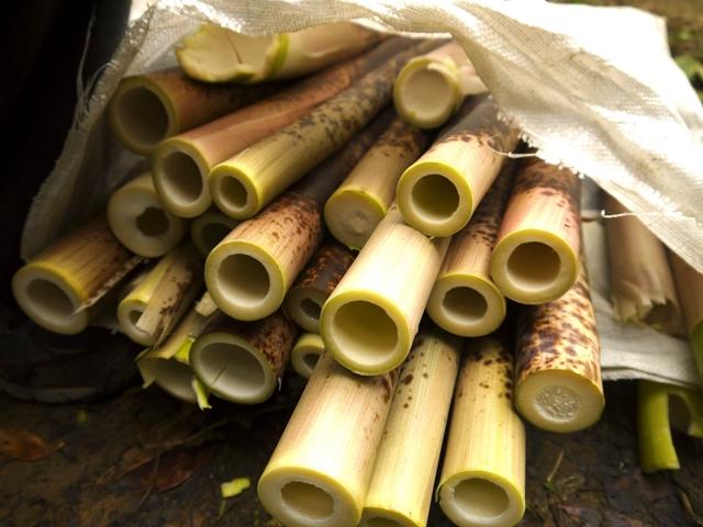 3月- 復興鄉桂竹筍採收樂
