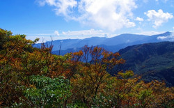 11月、12月- 北插天山賞山毛櫸