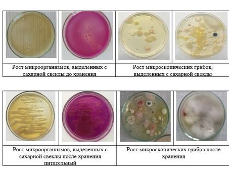 Применение продуцентов ферментов в биотехнологической промышленности