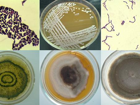 Коллекция культур микроорганизмов перспективных для биотехнологической промышленности