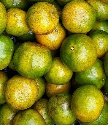 ส้มโชกุนเบตง GAP (Size L)
