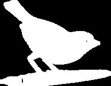 robin-white-logo.png