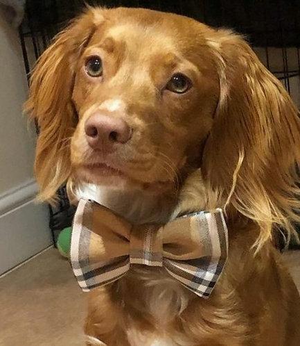 Tartan Dog Bow Tie BEIGE