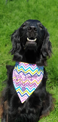Lets Party its my Birthday, Choice of Fabric, Over Collar Dog Bandana