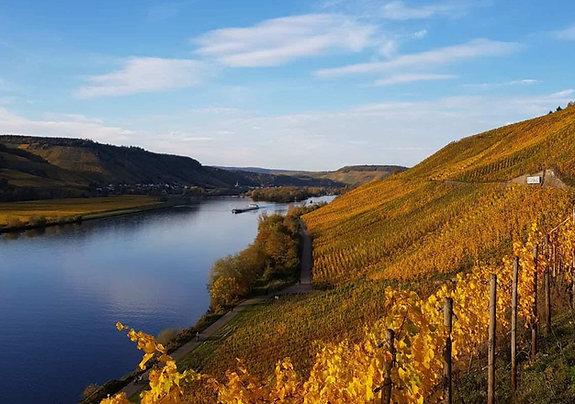 Gutschein Weinwanderung