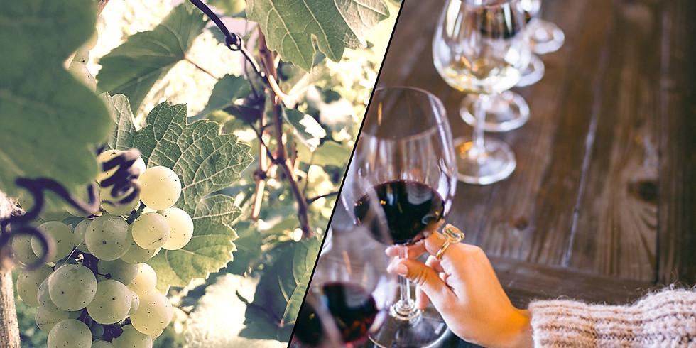 Weinprobe im Weingut