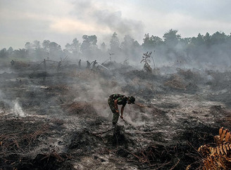 WHAT YOU BUY MAKES A DIFFERENCE - SUSTAINABLE PALM OIL