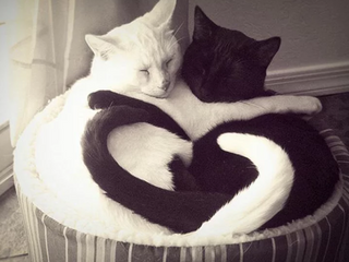 The Yin Yang of the Healing Relationship