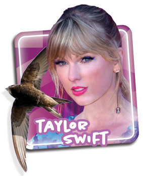 Music Stars and their Birdy Counterparts!