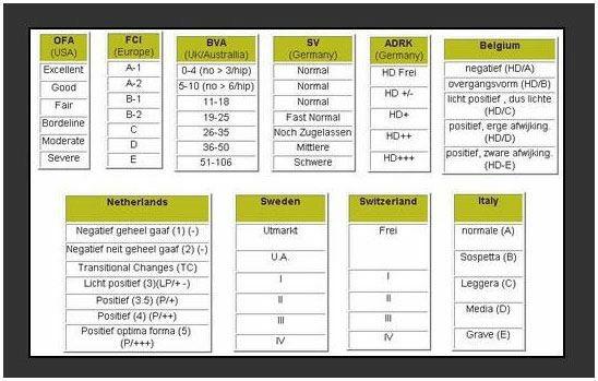 Rotweiler Hip Comparison Chart