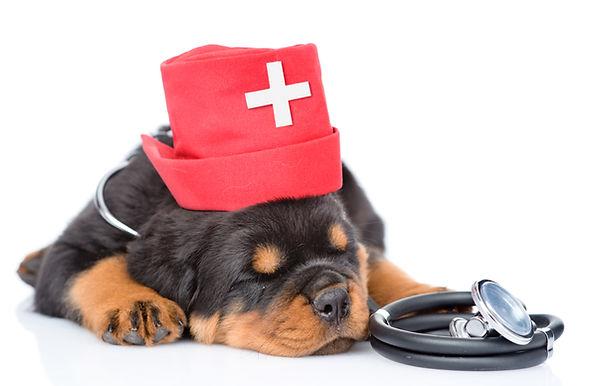 Rotweiler Breed Health