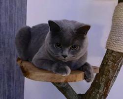 Skyota Cozmic Cookie