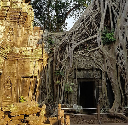 Храм оцепили корни дерева