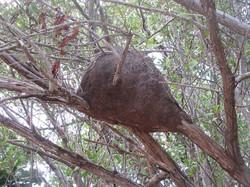 Термитник, какой-то или гнездо