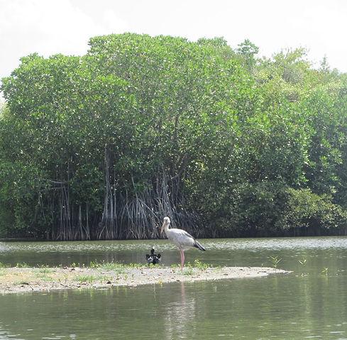 Птицы в лагуне Тангалле