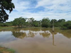 Озеро в саванне