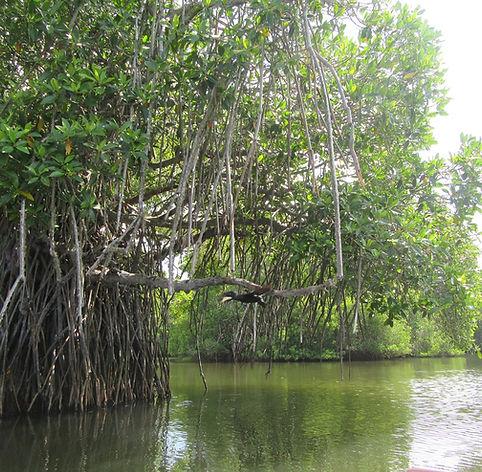 Необычное дерево в лагуне