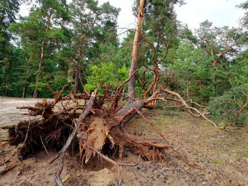 Живописные корни в лесу