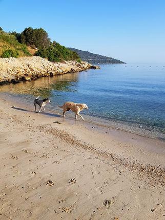 Отельные собаки на пляже