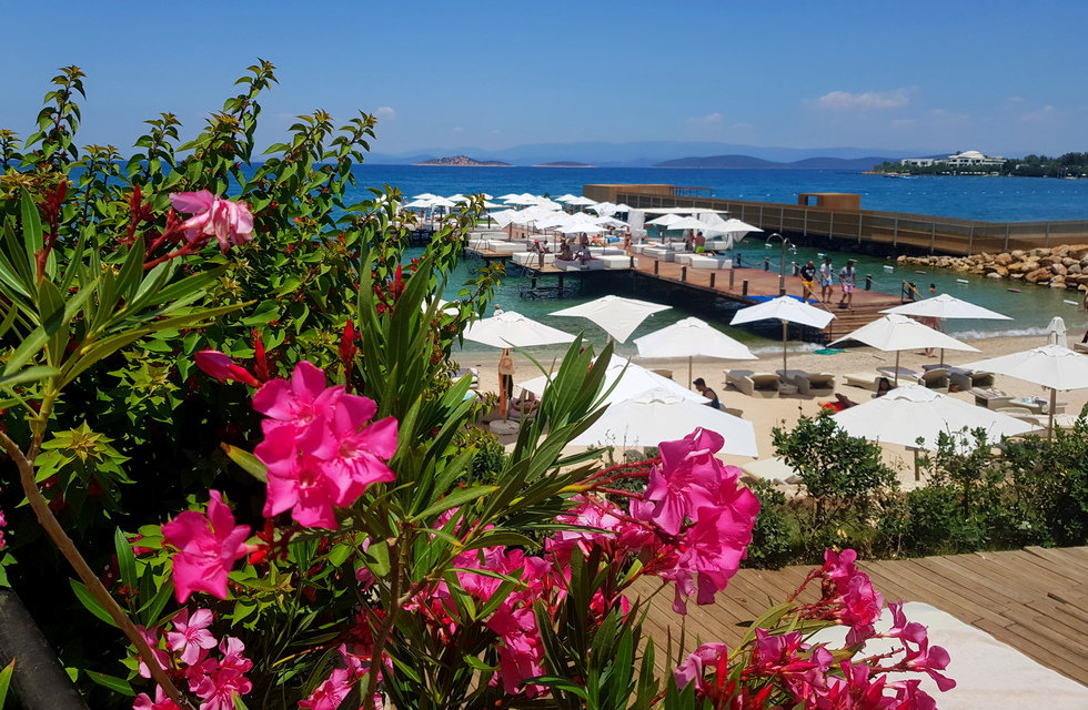 Вид на пляж, через розовые цветы