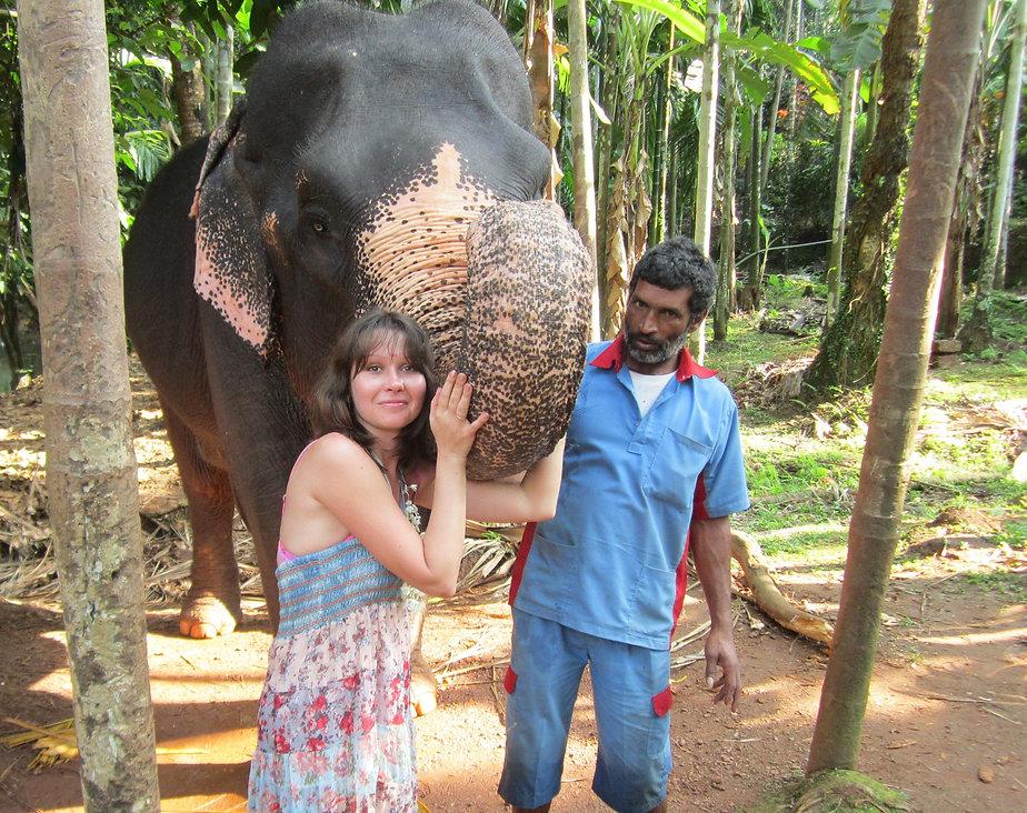 Дружелюбная слониха