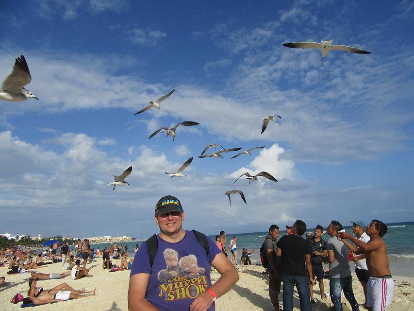 Чайки над городским пляжем Плая дель Кармен