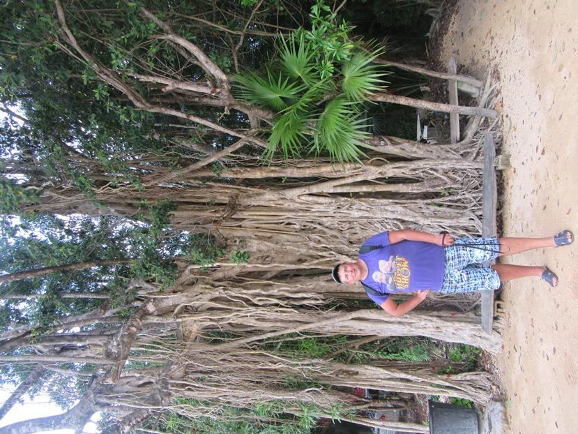 Деревья со многими стволами