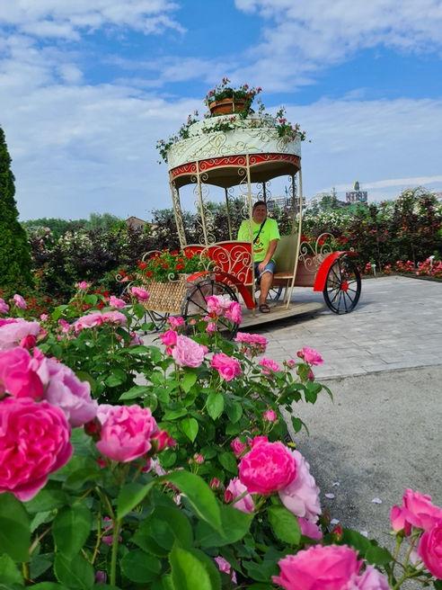 Карета в парке Камелия