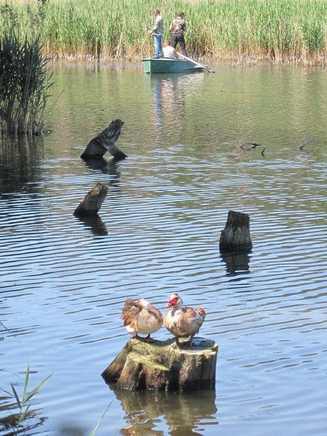 Утки на фоне охотников