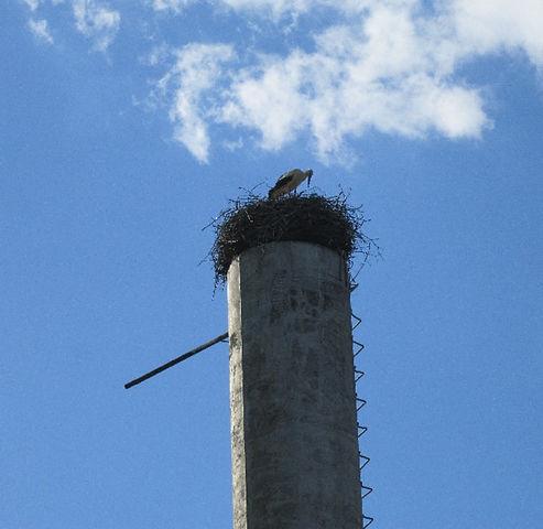 Гнездо аиста на трубе