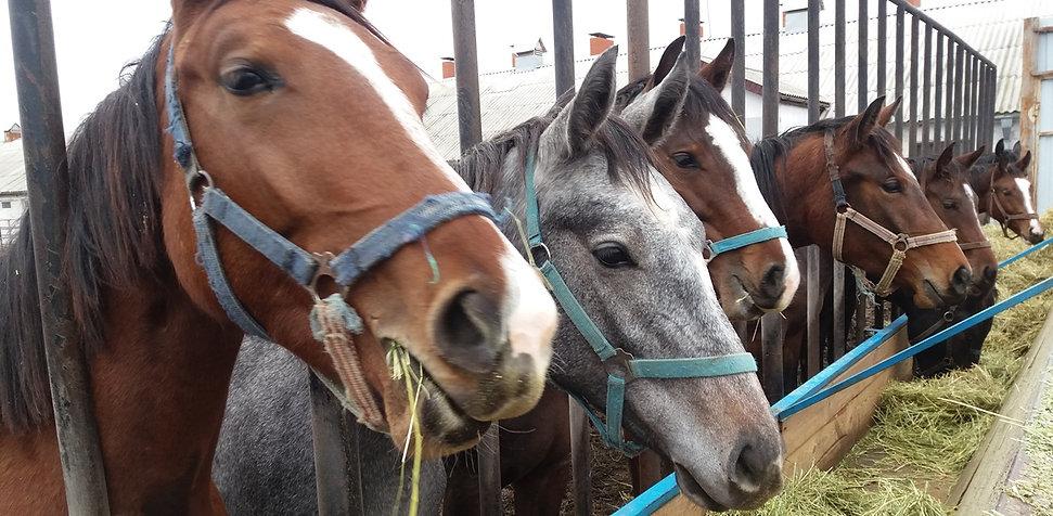 Девочки из лошадиного детского сада
