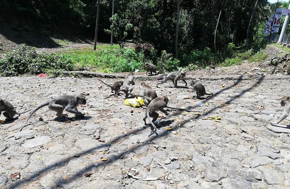Обезьянам дали полный пакет бананов