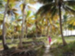 Пальмовая роща острова Саона