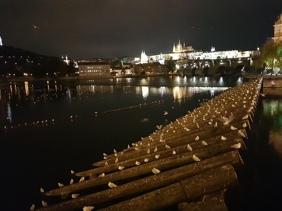 Место ночлега чаек, Влтава, Прага