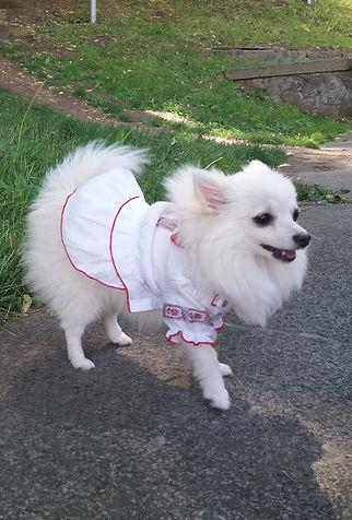 Собака в вышиванке