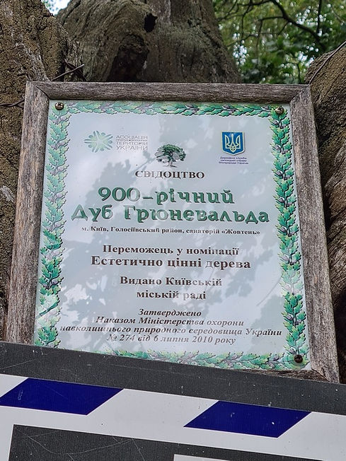 """Свидетельство победы в конкурсе свмых """"Эстетичных деревьев"""""""