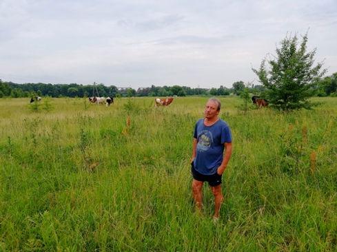 Коровы в поле, хороший фон