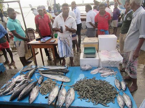 Рыбный рынок в Тангалле