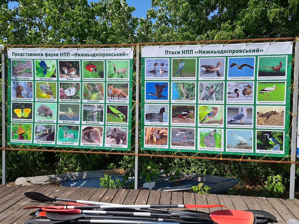 Фауна и птицы на реке Козак
