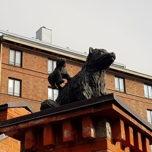 Семейство медведей во дворе в Хельсинки