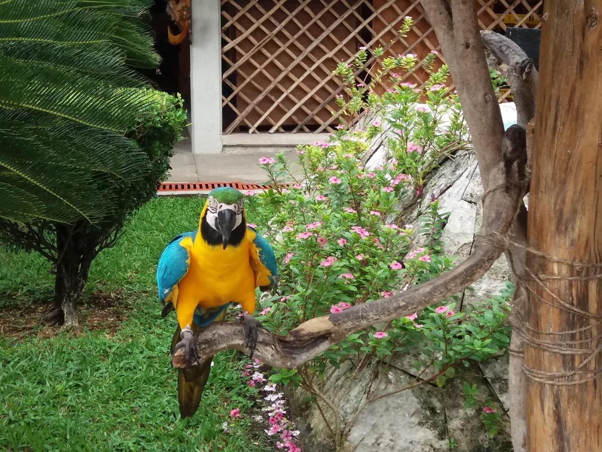 Попугай из джунглей
