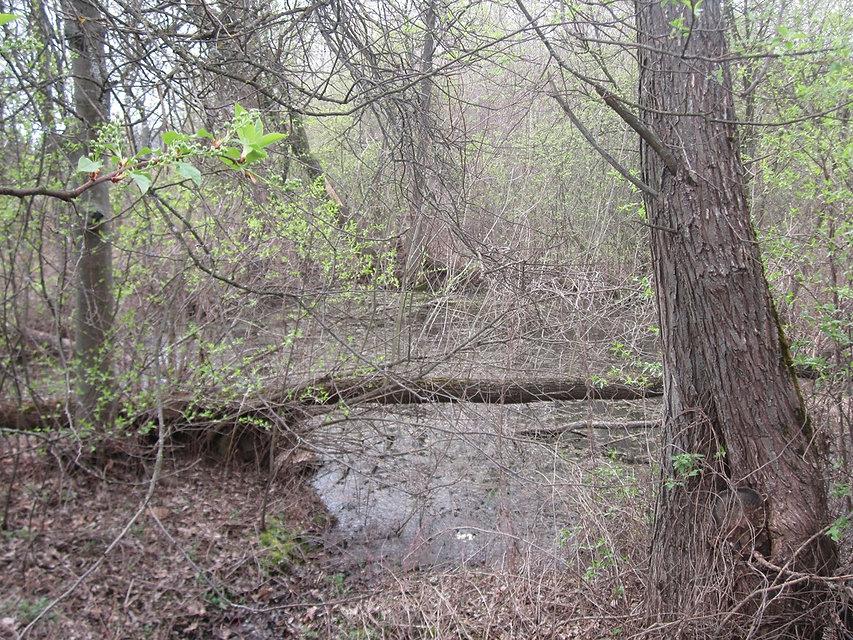 Дремучий лес в Рудне Воробьевской