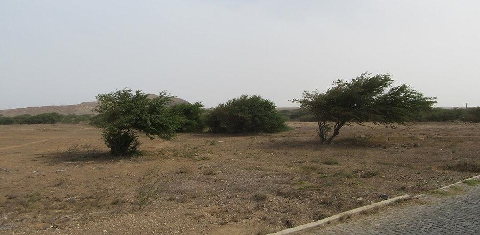 Растительность острова Сал