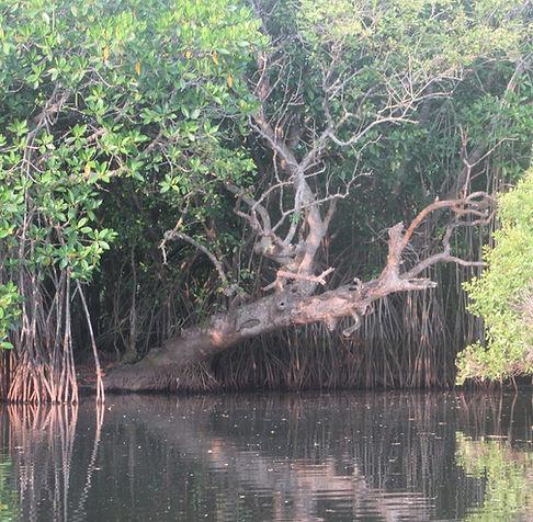 Деревья над водой