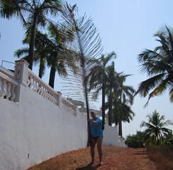 Пальмовое опахало